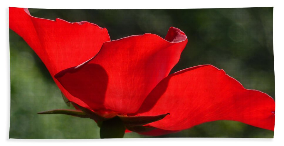 Connie Handscomb Hand Towel featuring the photograph The Beauty Of Imperfection by Connie Handscomb