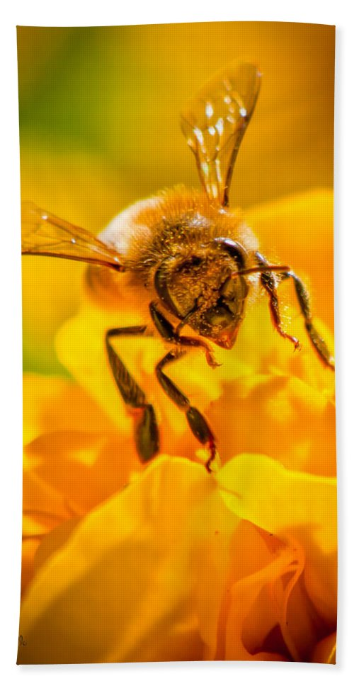 Bees Hand Towel featuring the photograph The Bee Gets Its Pollen by Bob Orsillo
