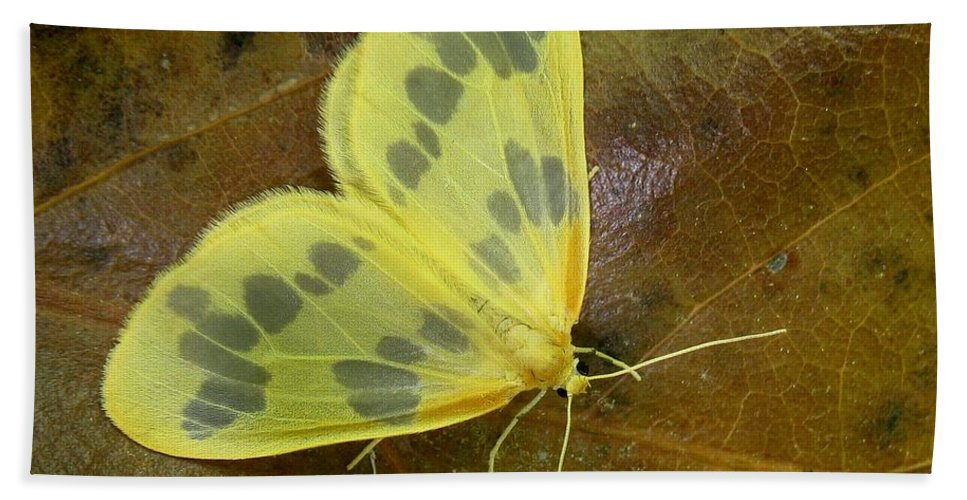 Eubaphe Mendica Hand Towel featuring the photograph The Beggar Moth by William Tanneberger