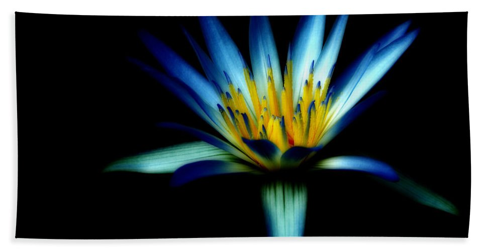 Blue Hand Towel featuring the photograph The Blue Lotus Of Egypt by Wayne Sherriff