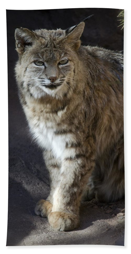 Bobcat Bath Towel featuring the photograph The Bobcat by Saija Lehtonen