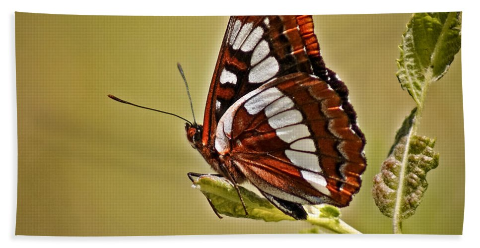 Bugs Hand Towel featuring the photograph The Butterfly by Ernie Echols