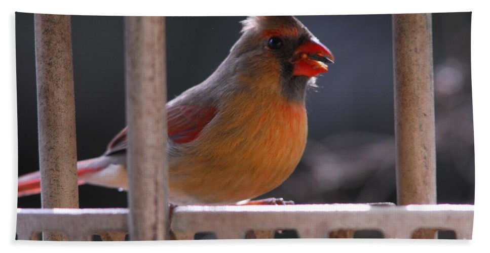 Cardinal Hand Towel featuring the photograph The Cardinal by Cindy Manero