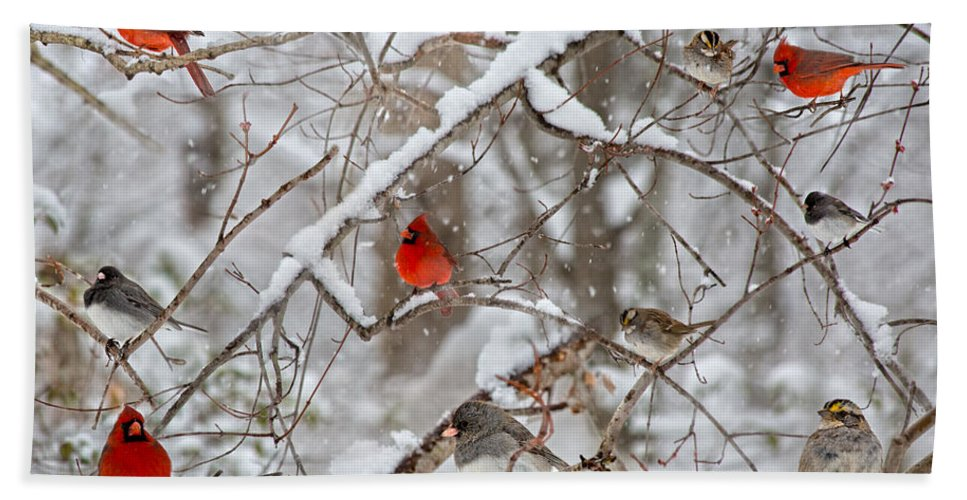 Red Bath Towel featuring the photograph The Cardinal Rules by Betsy Knapp