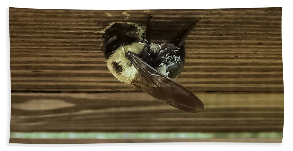 Carpenter Bee Hand Towel featuring the photograph The Carpenter by Charlie Cliques