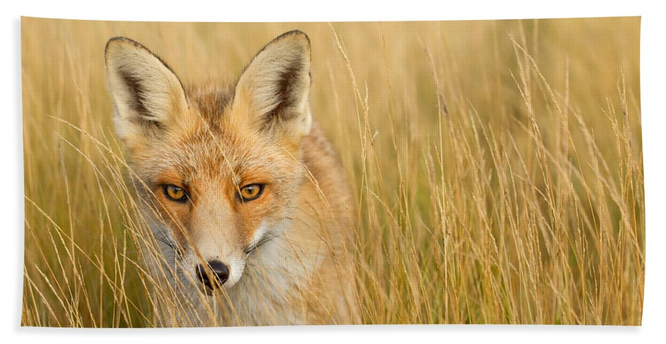 Afternoon Bath Towel featuring the photograph The Catcher In The Grass by Roeselien Raimond