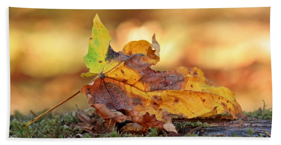 Fall Bath Sheet featuring the photograph The Colors Of Fall by Kim Mobley