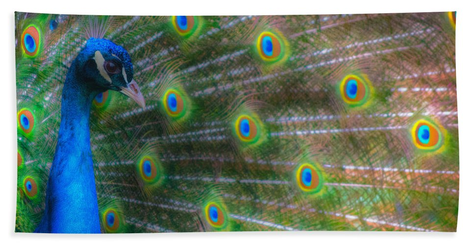 Animals Hand Towel featuring the photograph The Colours Of The Peacock by Rabiri Us
