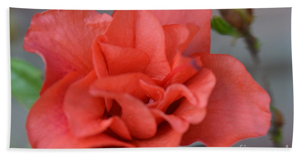 Honey Hand Towel featuring the photograph The Coral Carnival Photo C by Barb Dalton
