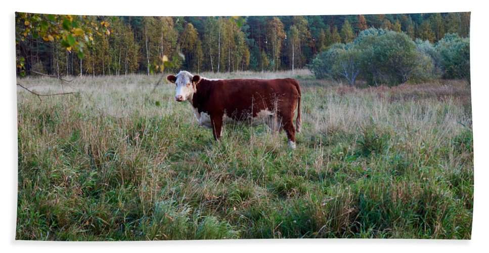 Finland Bath Sheet featuring the photograph The Cow by Kukka Lehto