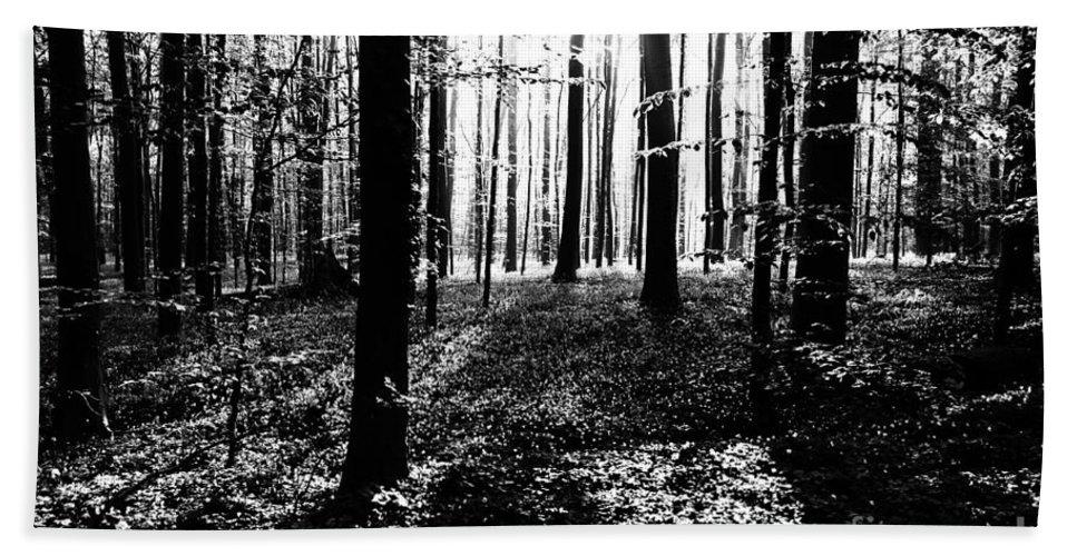 Dark Forest Bath Sheet featuring the photograph The Dark Forest by Brothers Beerens