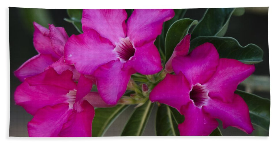 Desert Rose Bath Towel featuring the photograph The Desert Rose by Saija Lehtonen