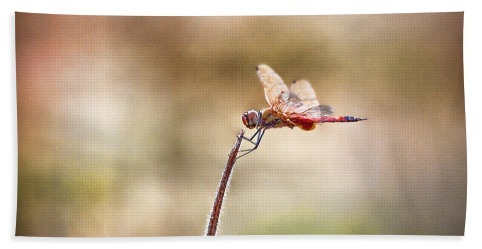 Dragonfly Bath Sheet featuring the photograph The Dragonfly by Douglas Barnard