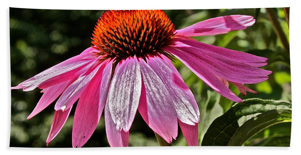 Echinacea Bath Sheet featuring the photograph The Flower by Mark Prescott Crannell