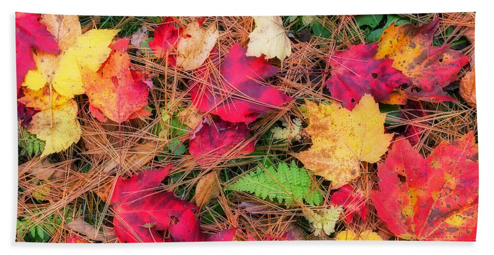 Autumn Bath Sheet featuring the photograph The Forest Floor by Bill Wakeley