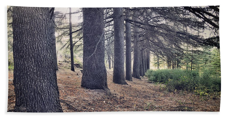Woods Hand Towel featuring the photograph The Forest Of A Thousand Stories by Guido Montanes Castillo