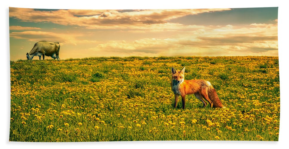 Cows Hand Towel featuring the photograph The Fox And The Cow by Bob Orsillo