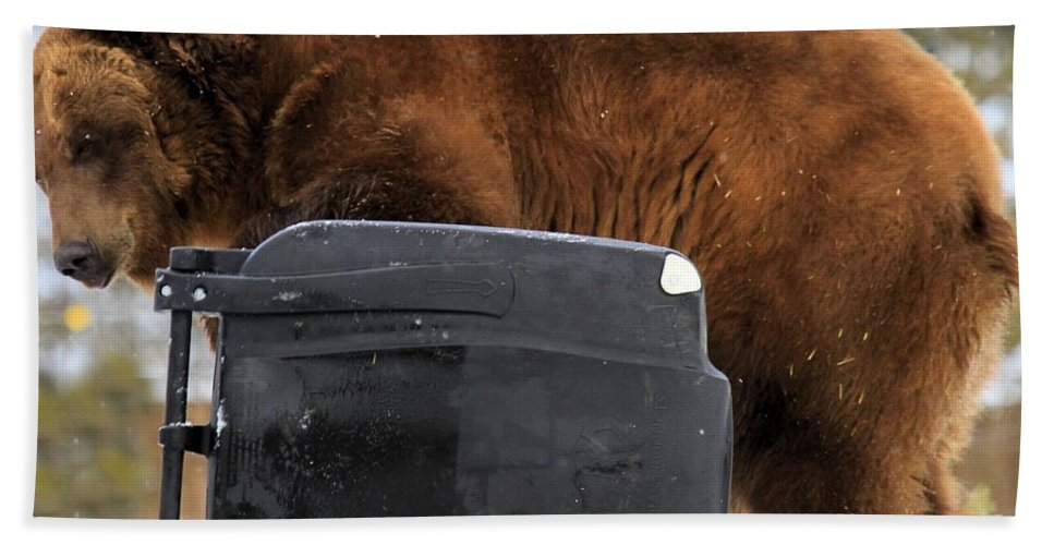 Grizzly Bear Hand Towel featuring the photograph The Garbage Man by Adam Jewell