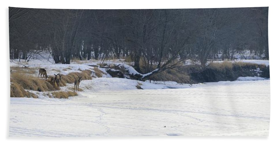 Deer Hand Towel featuring the photograph The Gathering by Bonfire Photography