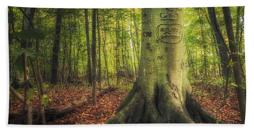 Tree Bath Sheet featuring the photograph The Giving Tree by Scott Norris
