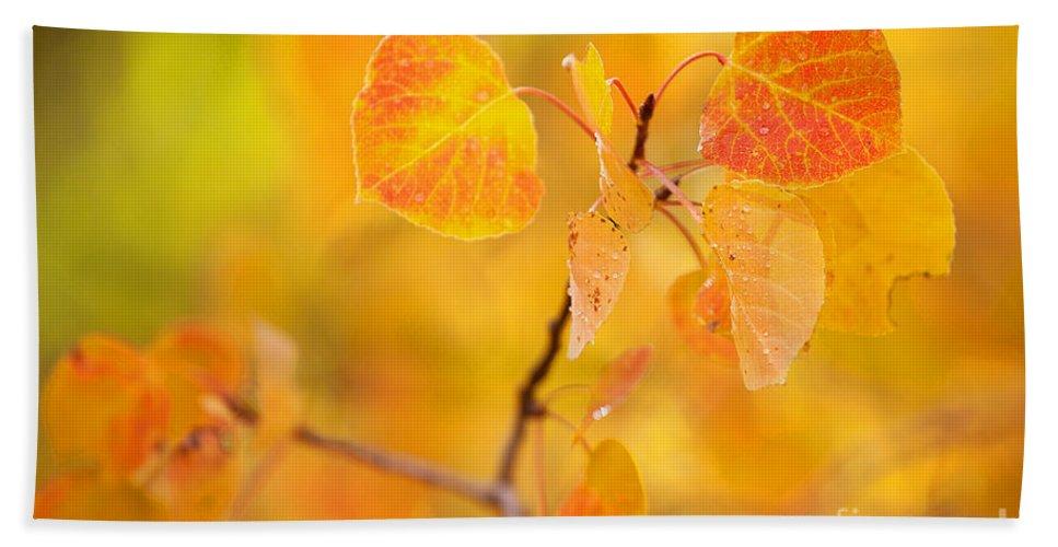 Autumn Colors Bath Sheet featuring the photograph The Gold Standard by Jim Garrison