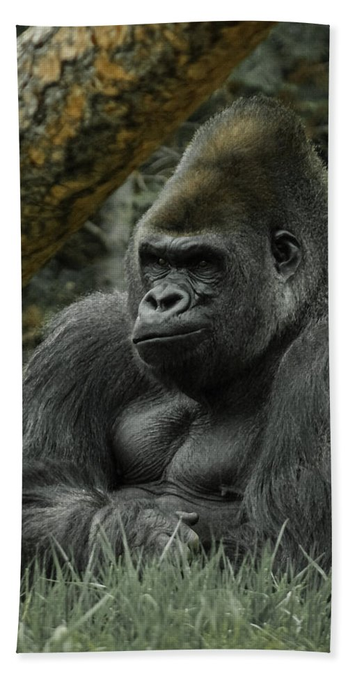 Animals Bath Sheet featuring the digital art The Gorilla 3 by Ernie Echols