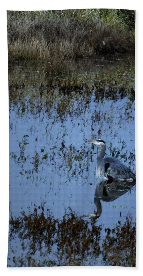 Heron Hand Towel featuring the photograph The Great Blue Calm by Belinda Greb