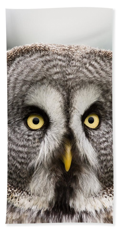 Great Grey Owl Hand Towel featuring the photograph The Great Grey Owl by Scott Carruthers