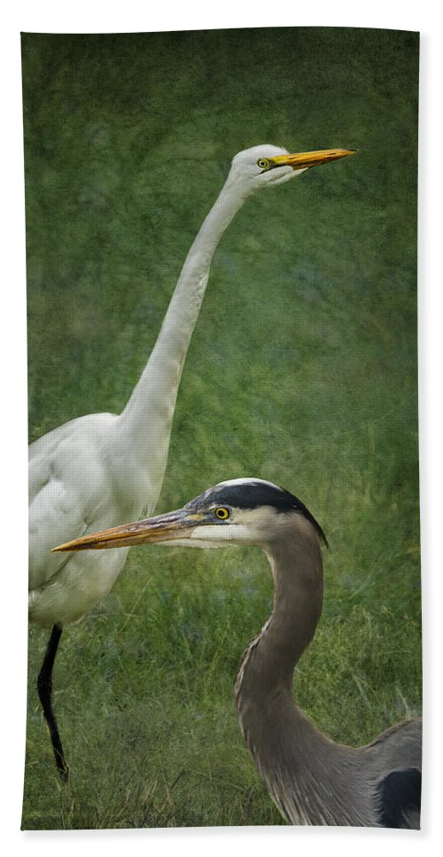 Great Egret Bath Sheet featuring the photograph The Greats - Birds That Is... by Belinda Greb