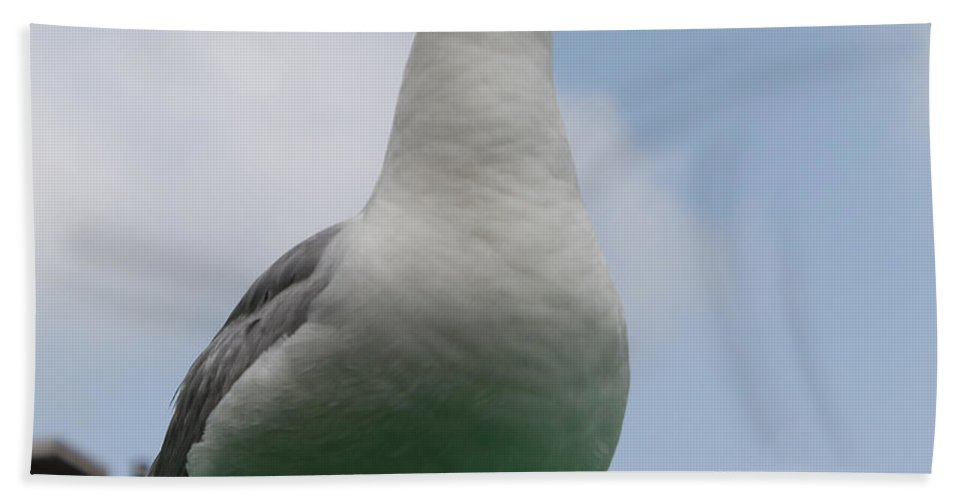 Roof Gull Seagull Cloud Clouds Sky Blue Green Animal Bird Photograph Sea Hand Towel featuring the photograph The Gull On The Roof by Steve K