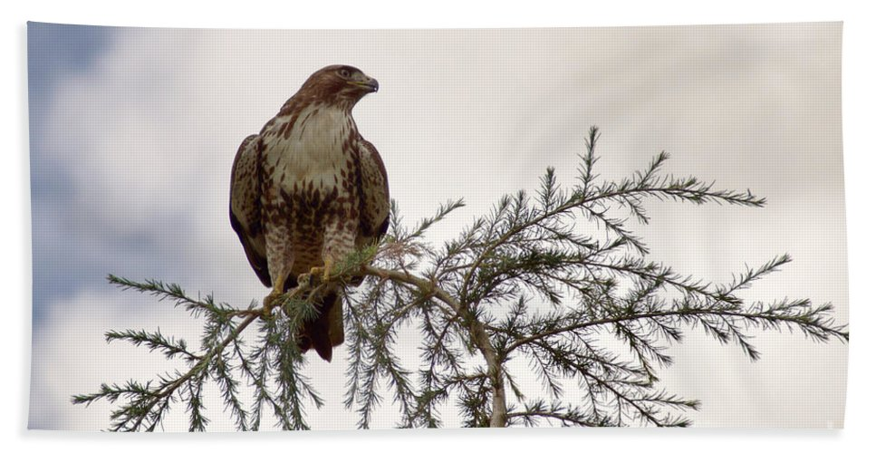 Bird Bath Sheet featuring the photograph The Hawk by Peggy Hughes
