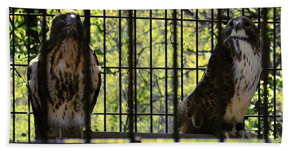 Hawks Hand Towel featuring the photograph The Hawks From The Series The Imprint Of Man In Nature by Verana Stark