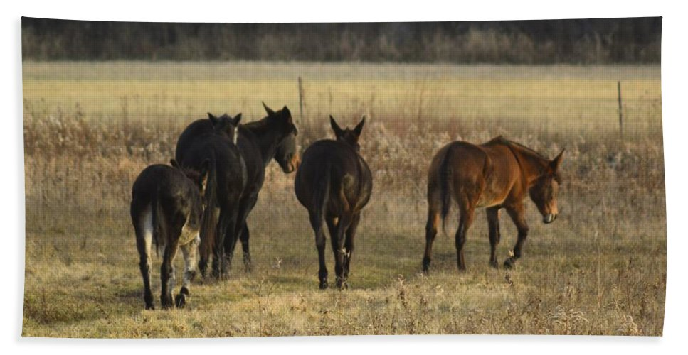 Jackass Hand Towel featuring the photograph The Jackasses by Bonfire Photography