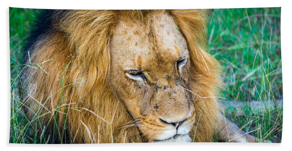 King Hand Towel featuring the photograph The King by Andrew Matwijec