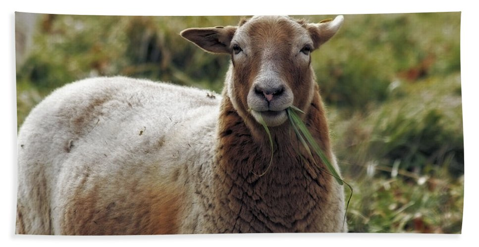 Feed My Sheep Bath Sheet featuring the photograph Feed My Sheep by CE Haynes