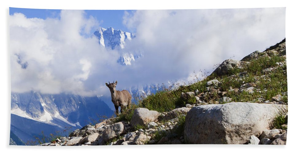 Alpine Ibex Hand Towel featuring the photograph The Little Ibex by Mircea Costina Photography