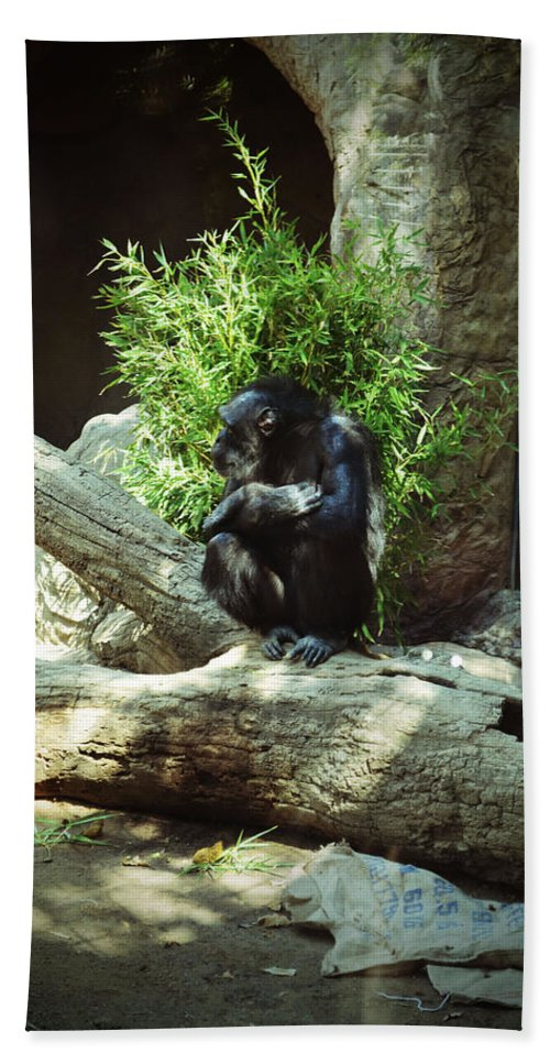 Chimpanzee Hand Towel featuring the photograph The Lone Chimp by Holly Blunkall
