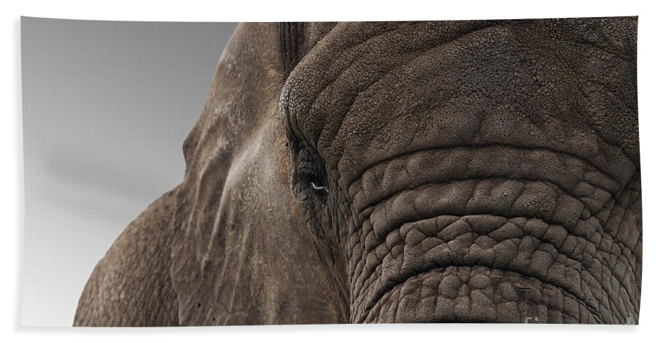 Meek Hand Towel featuring the photograph The Meek Mammouth by Sheila Laurens