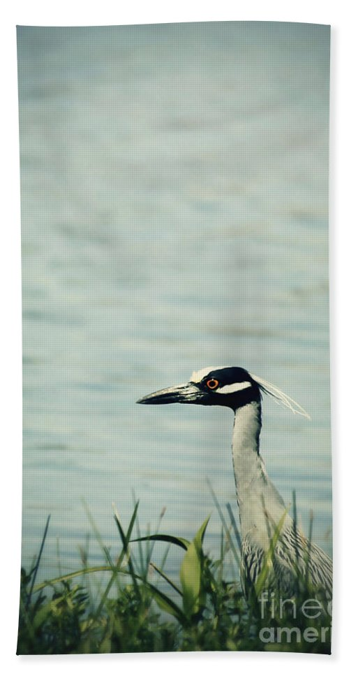 Heron Hand Towel featuring the photograph The Night Heron by Trish Mistric
