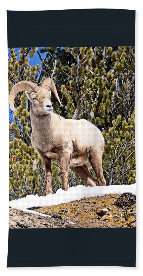 Hoback Junction Hand Towel featuring the photograph The Perfect Pose by Image Takers Photography LLC - Laura Morgan