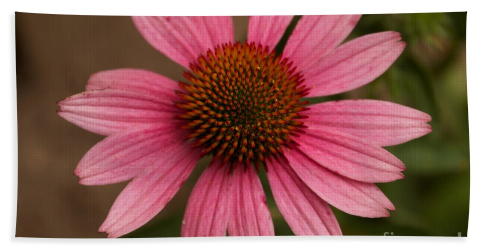 Pink Hand Towel featuring the photograph The Pink Daisy by William Norton