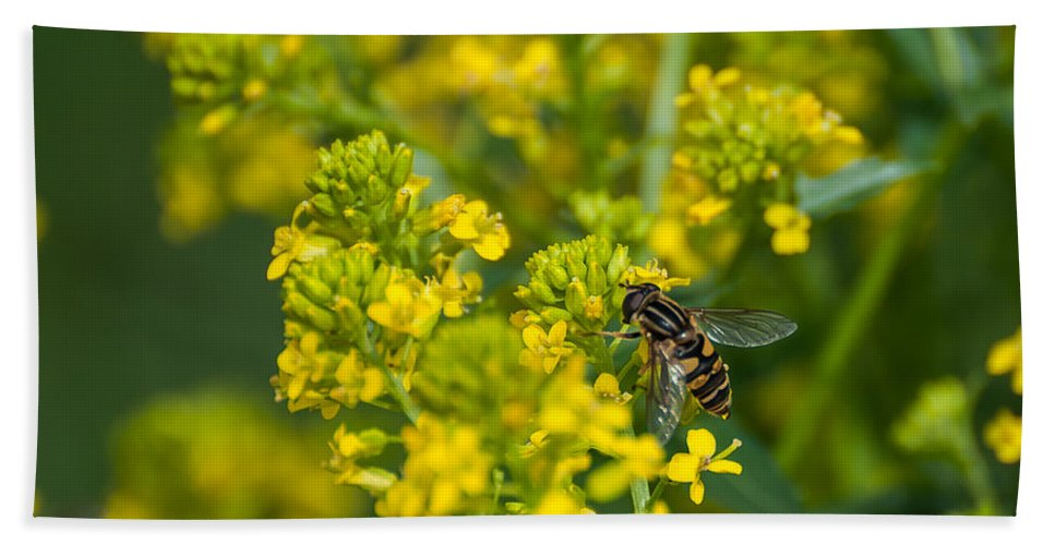 Bee Bath Sheet featuring the photograph The Pollinator by Bianca Nadeau