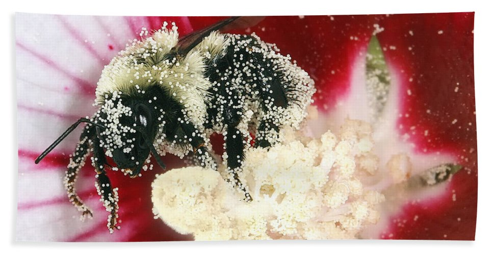 Bees Hand Towel featuring the photograph The Pollinator by Geoff Crego
