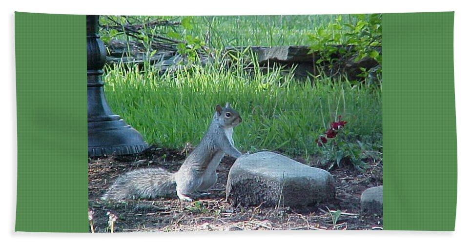 Squirrel Bath Sheet featuring the photograph The Poser by Rachel Kaufmann