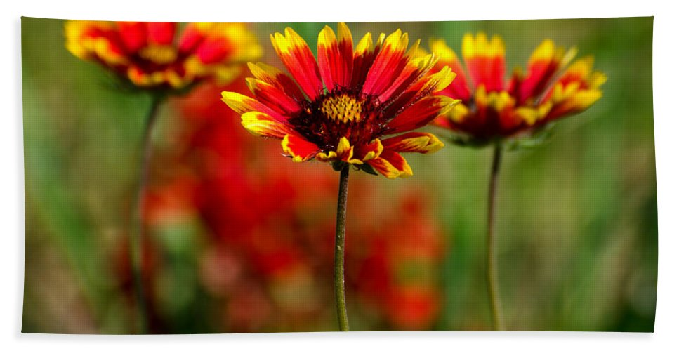 Wildflower Hand Towel featuring the photograph The Power Of Three by Linda Shannon Morgan