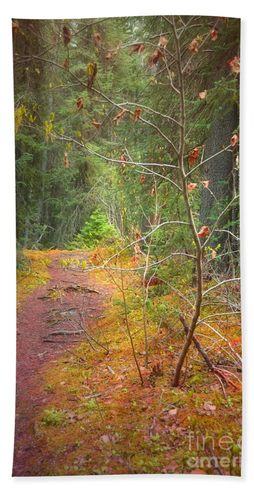 Path Hand Towel featuring the photograph The Quiet Path by Tara Turner