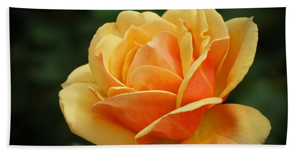 Beautiful Bath Sheet featuring the photograph The Rose 1 by Ernie Echols