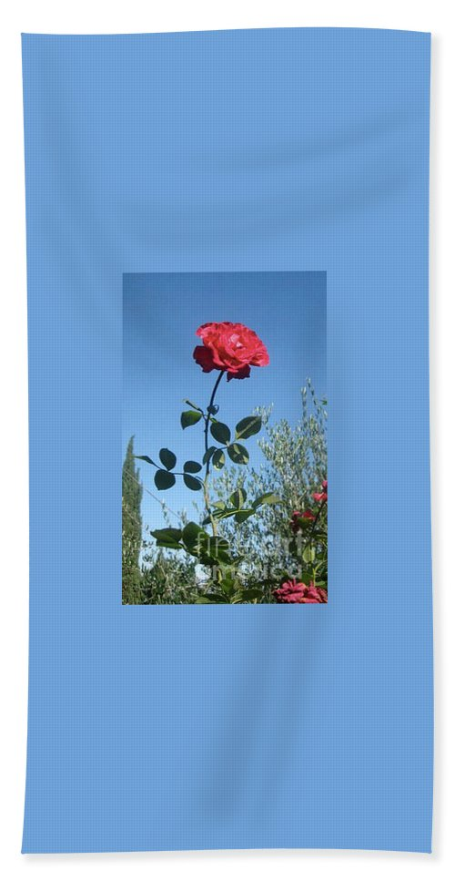 Rose Hand Towel featuring the photograph The Rose by Christy Gendalia