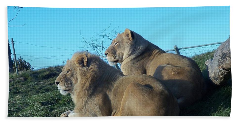 Animal Photography Hand Towel featuring the photograph The Royal Couple by Lingfai Leung
