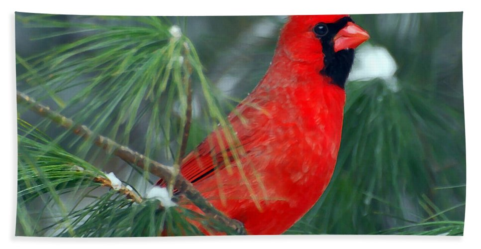 Male Cardinal Bath Sheet featuring the photograph The Santa Bird by Kerri Farley